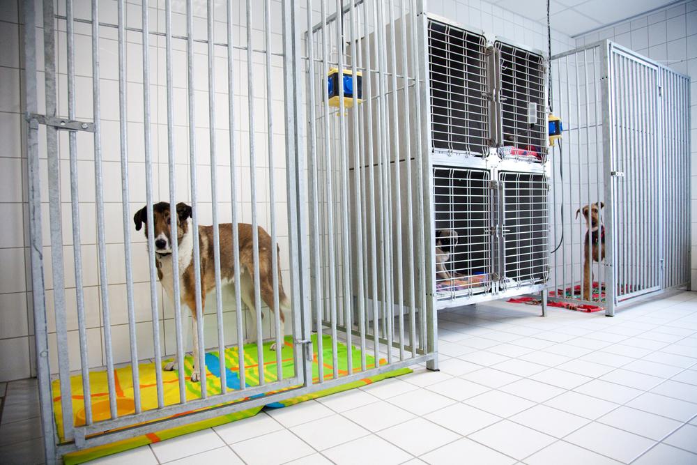 Hundebox-IMG_2980