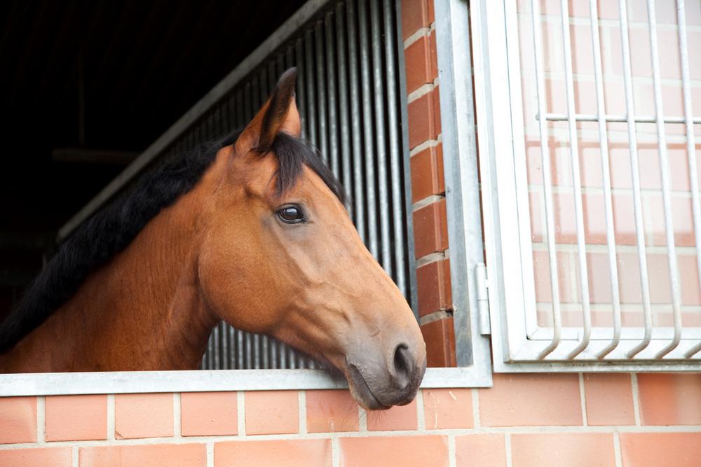 Pferd-Fenster-IMG_3016