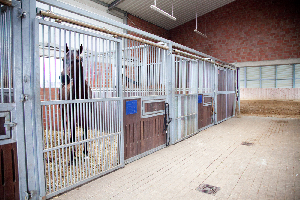 Pferdebox-innen-IMG_3330