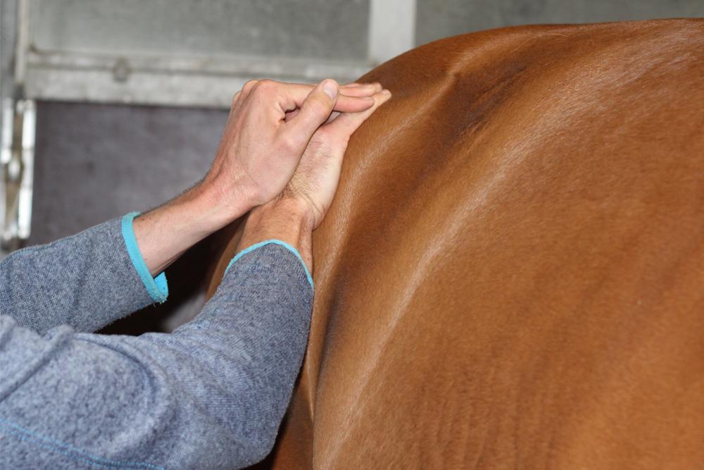 Chropraktik-Pferd-1